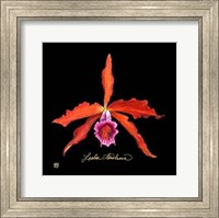 Vivid Orchid II Fine Art Print