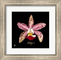 Vivid Orchid III Fine Art Print