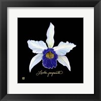 Vivid Orchid IV Fine Art Print