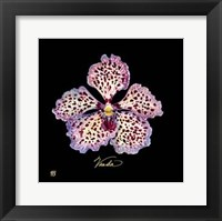 Vivid Orchid V Fine Art Print