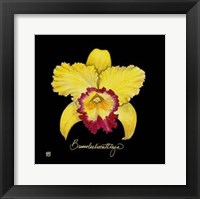 Vivid Orchid VII Fine Art Print