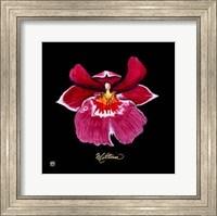 Vivid Orchid VIII Fine Art Print
