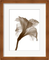 Inflorescence I Fine Art Print