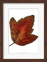 Leaf Inflorescence I Fine Art Print