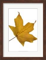 Leaf Inflorescence II Fine Art Print