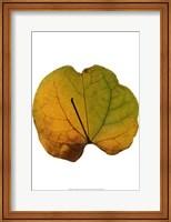 Leaf Inflorescence III Fine Art Print