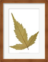 Leaf Inflorescence IV Fine Art Print