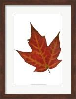 Leaf Inflorescence V Fine Art Print