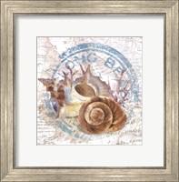 Seashells By The Seashore I Fine Art Print