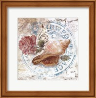 Seashells By The Seashore II Fine Art Print