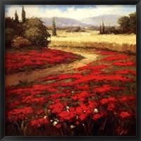 Red Poppy Trail Fine Art Print