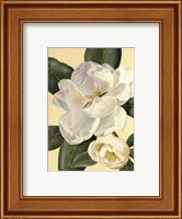 Morning Magnolia Fine Art Print