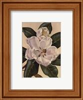 Afternoon Magnolia Fine Art Print
