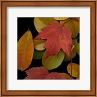 Small Vivid Leaves III Fine Art Print