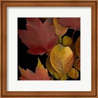 Small Vivid Leaves IV (ST) Fine Art Print