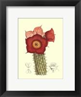Flowering Cactus II Fine Art Print