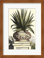 Antique Munting Aloe I Fine Art Print