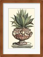Antique Munting Aloe IV Fine Art Print