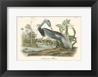 Louisiana Heron Fine Art Print