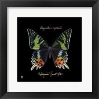 Striking Butterfly II Fine Art Print