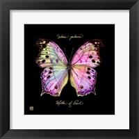 Striking Butterfly III Fine Art Print