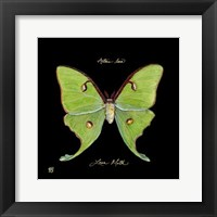 Striking Butterfly IV Fine Art Print