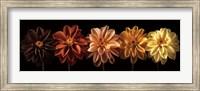 Floral Salute Fine Art Print