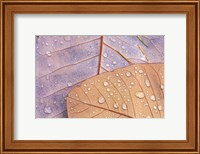 Waterdrops on Magnolia Journal Fine Art Print