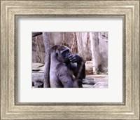 Gorilla - Perhaps? Fine Art Print