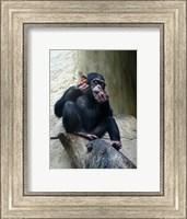 Orangutan - Burlap Hat Fine Art Print