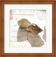 Postal Shells I Fine Art Print