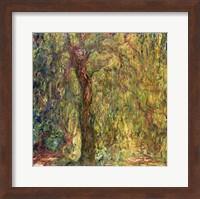 Weeping Willow green Fine Art Print