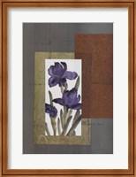 Regal Iris 1 Fine Art Print