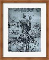 Bone Structure of the Human Neck and Shoulder Fine Art Print