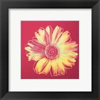 Daisy, c.1982 (fuchsia & yellow) Fine Art Print