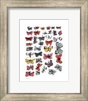 Butterflies, 1955  (many/varied colors) Fine Art Print