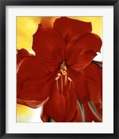 Red Amaryllis, 1937 Fine Art Print