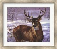 Through My Window- Whitetail Deer Fine Art Print