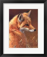 Curious- Red Fox Fine Art Print