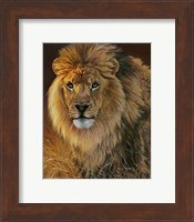 Power and Presence- African Lion Fine Art Print