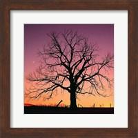 Arboral Afterglow Fine Art Print