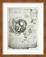 The Human Fetus in the Womb Fine Art Print