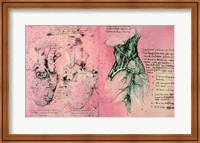 Anatomical drawing of hearts and blood vessels Fine Art Print