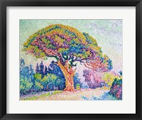 The Pine Tree at St. Tropez, 1909 Fine Art Print