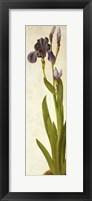 An Iris Fine Art Print