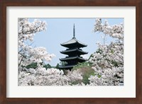 Cherry Blossoms Ninna-Ji Temple Grounds Kyoto Japan Fine Art Print