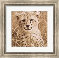 Young Cheetah Fine Art Print