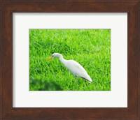 Egret In Field Fine Art Print