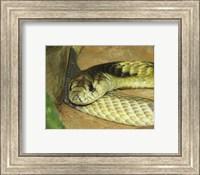 Egyptian Cobra Fine Art Print