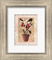 Potted Cattleya Fine Art Print